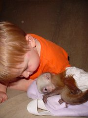 Well Train Baby Capuchin Monkey Ready For Adoption!!!!!
