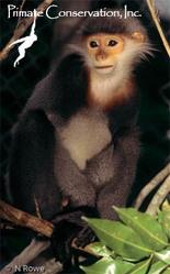 Lemur,  Apes,  Chimpanzees,  Gibbons,  Primatology -  Primate Conservation