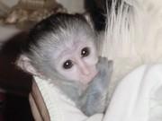 Lovely Baby Spider Monkey