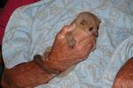 Kikanjou Babies for sale