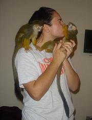 well tarmed capuchin monkeys for new homes