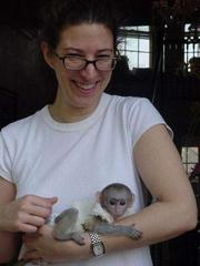 Cute and  Adorable Male and Female capuchine monkey's for adoption